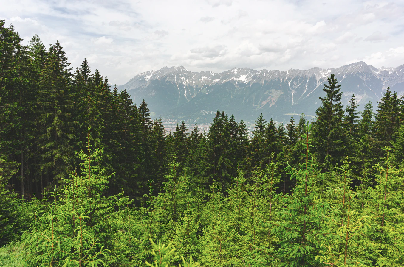 A beautiful forest. in the background there are mountains, in the foreground there are young trees.